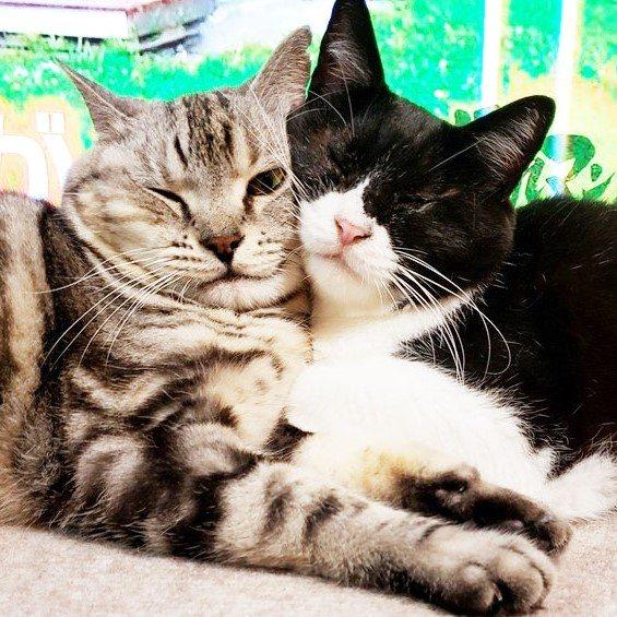 仲間と助け合って暮らす、盲目の猫メンメ(右)(写真:ねこけんブログより)の画像