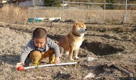 新人作業員の男の子に指示を出しつつ、日に当たってのんびりする柴犬・はっちゃく監督(画像提供:@farm_docan)