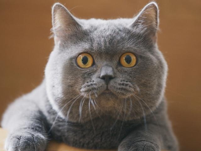 話題のサランラップのCM『切りたい猫』篇よりの画像