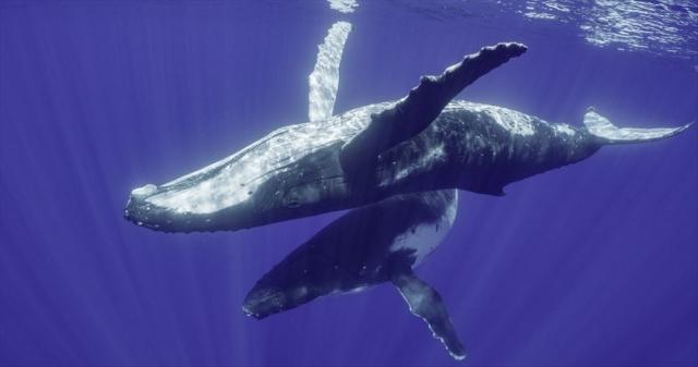 ディズニープラス オリジナル作品『クジラと海洋生物たちの社会』(4月22日より独占配信) (C)2021 NGC Network US, LLC. All rights reserved.の画像