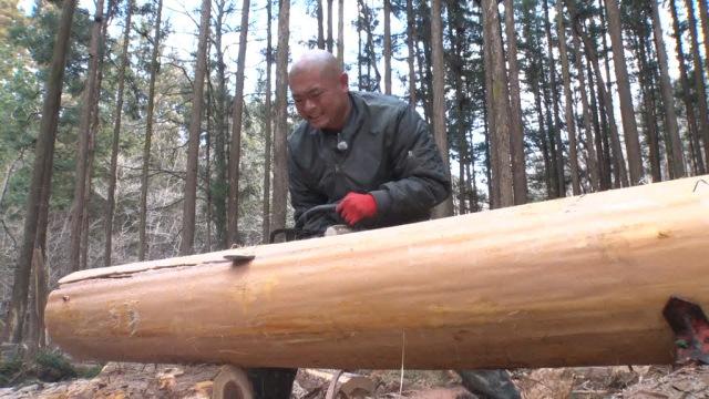 ログハウス建築に使う木を切り倒すあばれる君(C)TBSの画像