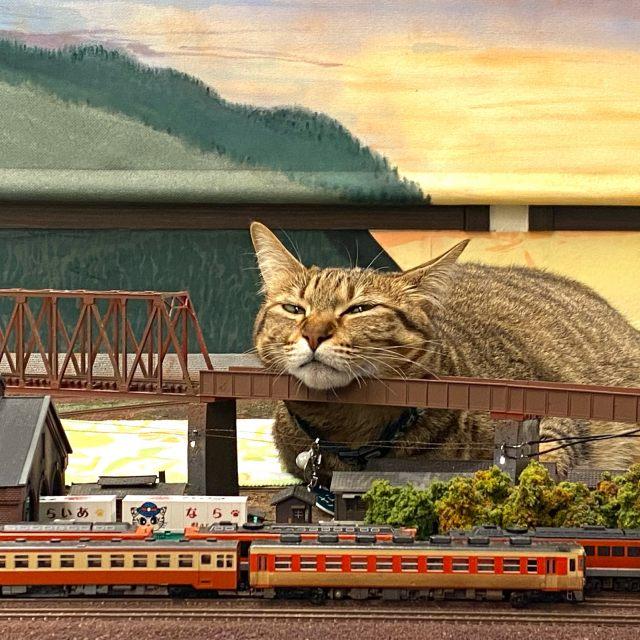 ジオラマの上を闊歩する猫たちがいる大阪府の「ジオラマ食堂」 写真提供/ジオラマ食堂の画像