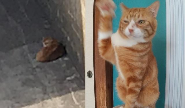 川底に落ちていた猫ドボン、保護されイケメンに変貌(写真:ねこけんブログより)の画像