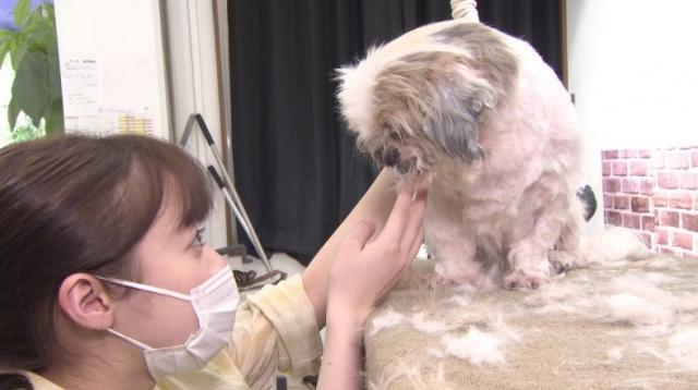 5日放送『I LOVE みんなのどうぶつ園』に出演する橋本環奈 (C)日本テレビの画像