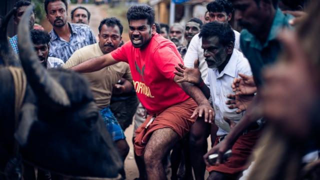 インド映画『ジャッリカットゥ 牛の怒り』7月17日よりシアター・イメージフォーラムほかで順次公開 (C)2019 Jallikattuの画像