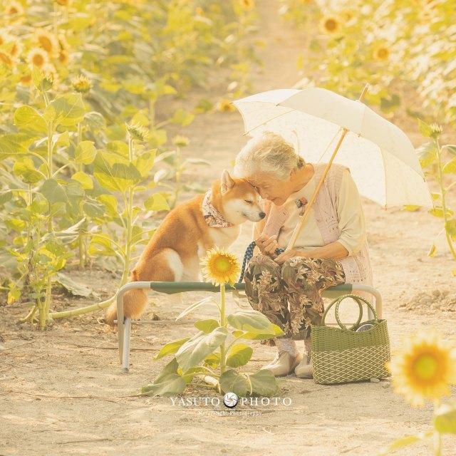 おばあちゃんと幸せそうな芝犬の福ちゃんの画像