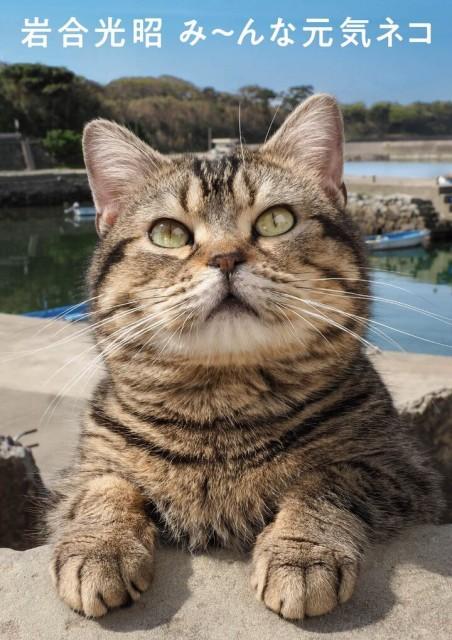写真集『岩合光昭 み~んな元気ネコ』の画像