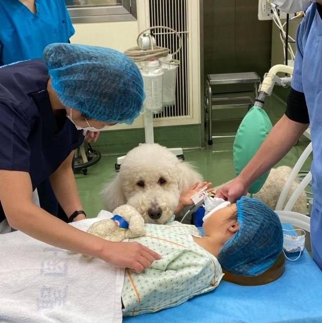 手術の直前まで患者さんに寄り添う勤務犬・モリスの画像