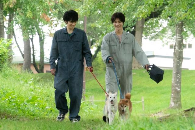 映画『犬部!』(7月22日公開)劇中だけでなく撮影の合間にも犬たちの散歩や世話を積極的に行っていた林遣都、中川大志 (C)2021『犬部!』製作委員会の画像