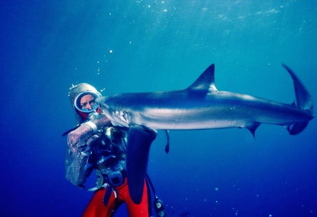『サメと遊ぶ伝説のダイバー』7月30日(金)よりディズニープラスで独占配信 (C)2021 NGC Network US,LLC. All rights reserved.の画像