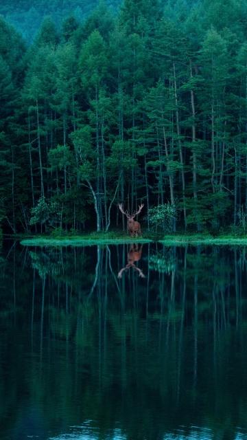 ツイッターで19.2万いいねを集めた「御射鹿池と鹿.」(C)霧月 傑さんの画像
