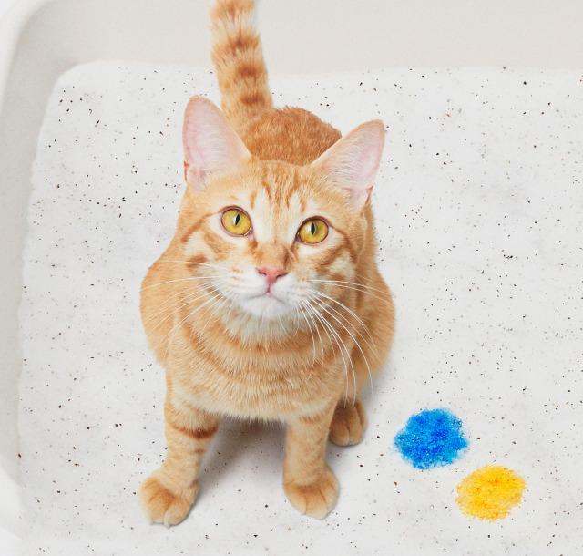 毎日の尿検査で健康状態をチェックできる猫砂『しぐにゃる』の画像