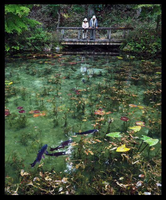 6年前に突然注目された「モネの池」(写真提供:関市役所 板取事務所)の画像