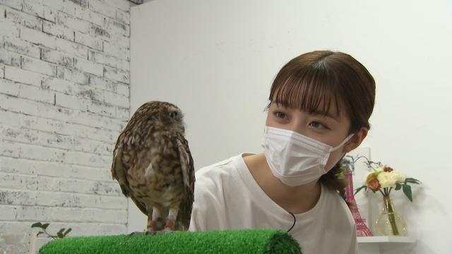 『I LOVE みんなのどうぶつ園 2時間SP』に出演する橋本環奈(C)日本テレビの画像