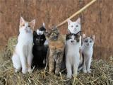 """動物写真家・岩合光昭語る、コロナ禍にネコが教えてくれた""""本当の豊かさ""""「自分たちの世界での充足があればいい」"""
