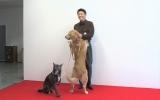 坂上忍、愛犬とファッション誌デビュー 『Numero TOKYO』表紙に抜てき