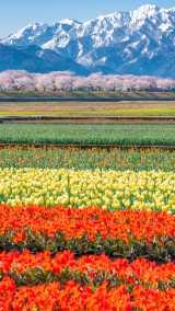 """""""富山の本気""""が「まるで天国みたい」、写真家が地元の絶景をSNSにアップし続ける理由"""
