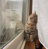 映画のワンシーン? 雨降る空を見つめる子猫の姿に28万いいね「生命って芸術」