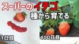 「スーパーで買ったイチゴ、400日間育てると…?」630万再生の記録動画に反響、1年以上の超大作の意図は?