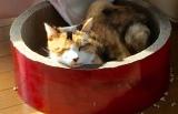 「お日様はあたたかいって知った」7年間も閉じ込められた母猫、病魔に倒れるも幸せつかんだ最期の日々
