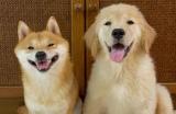 """「ニヒヒ…」と""""満開の笑顔""""、漫画のような表情で笑うデコボコ犬コンビにやられてしまう人続出"""