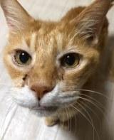 「13年間、押入れで生きた」光を知らない涙目の猫、「愛だけ」では命を預かることはできない