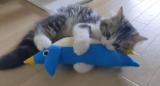 「昨日の夜に何があった?」無関心だったおもちゃに急に夢中になる子猫がかわいすぎ